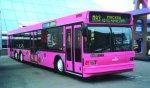 Обновленный автобус МАЗ в Санкт-Петербурге
